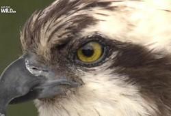 Интересные документальные фильмы о птицах
